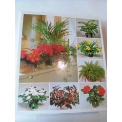 Izbové kvetiny od A do Z